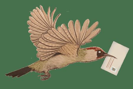 Glacis vogel 1 kuvert